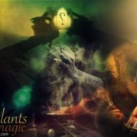 النباتات واستخداماتها في السحر والشعوذة